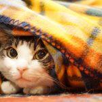 スイッチ切り忘れ対策。電気毛布は、タイマー付きコンセントと併用がオススメ!